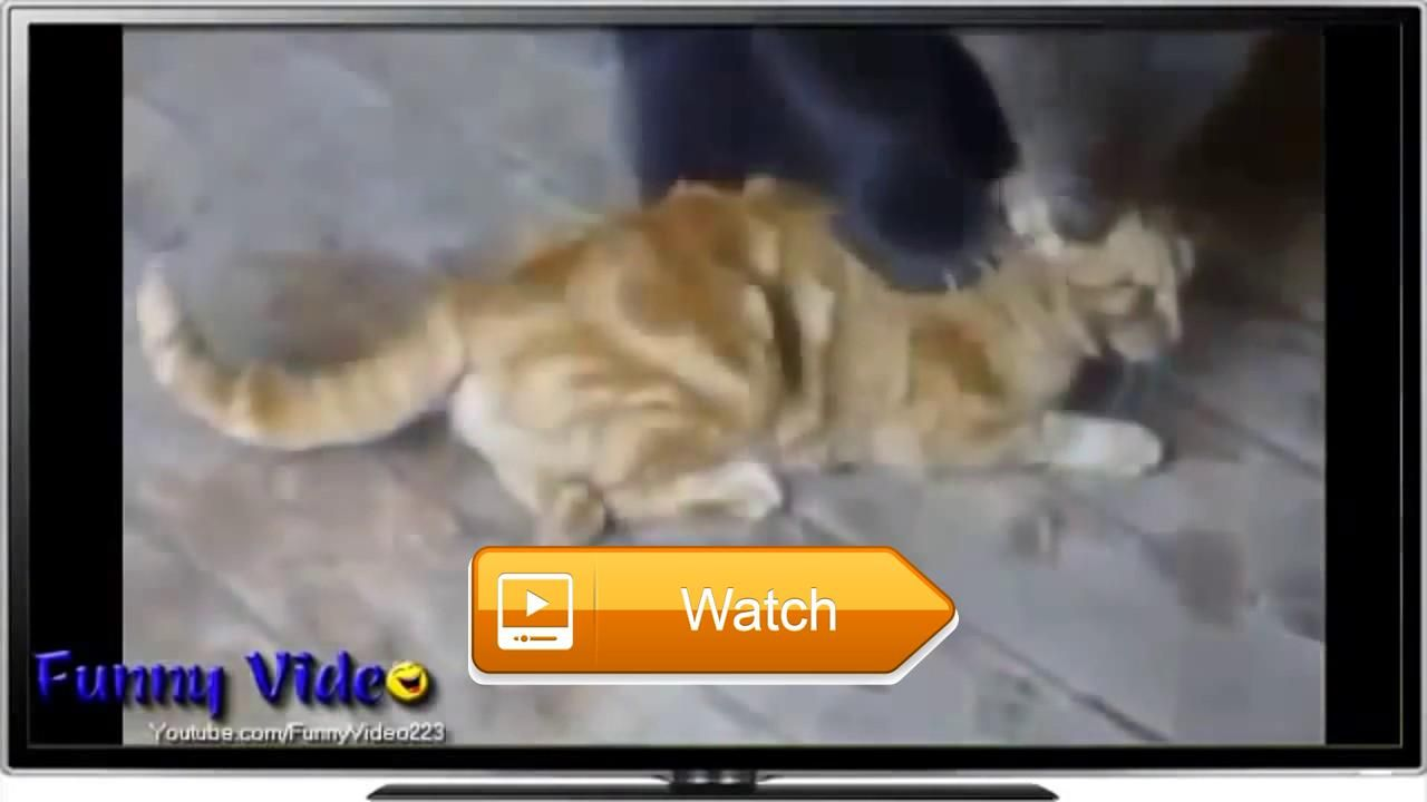 Uncategorized Funny Kitty Videos insane funny cats interact with wild animals cat videos kitty pets