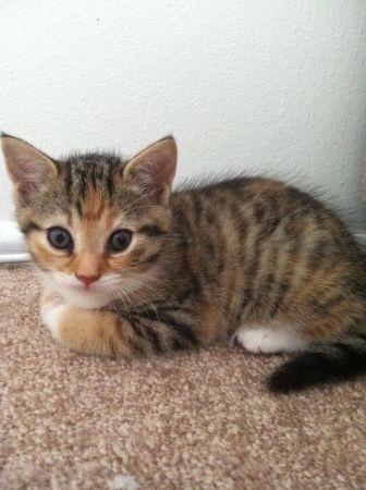 Free Kittens Liverpool Pets Kittens Animals