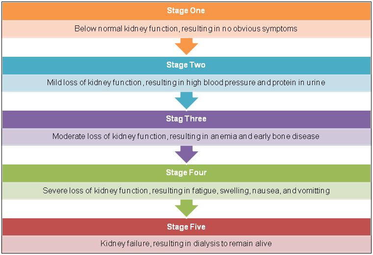 5 Stages Of Kidney Disease Kidney Disease Stages Kidney Disease Awareness Polycystic Kidney Disease
