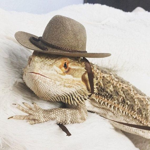 9a177381a3dd89 Cowboy Hats for your Bearded Dragon, Snakes, & Small Pets! Multiple sizes,  three colors.