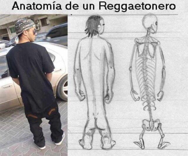 anatomia de un reggatonero. #masquebromas #risas #humor #bromas ...
