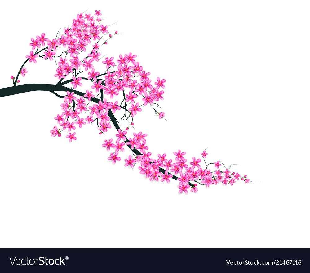 Watercolor Sakura Frame Background With Blossom Vector Image On