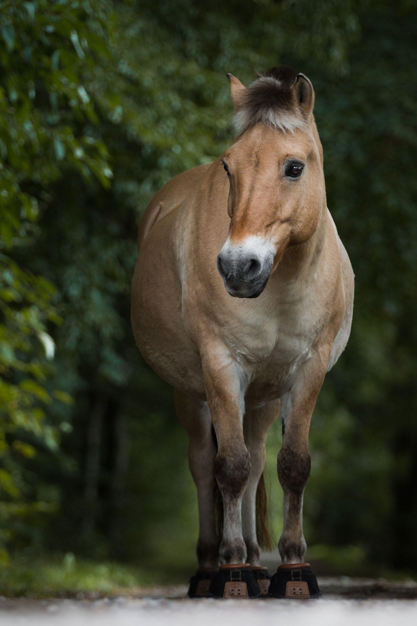 magnifique cheval isabelle chevaux quitation pinterest isabelle poulain et puissance. Black Bedroom Furniture Sets. Home Design Ideas
