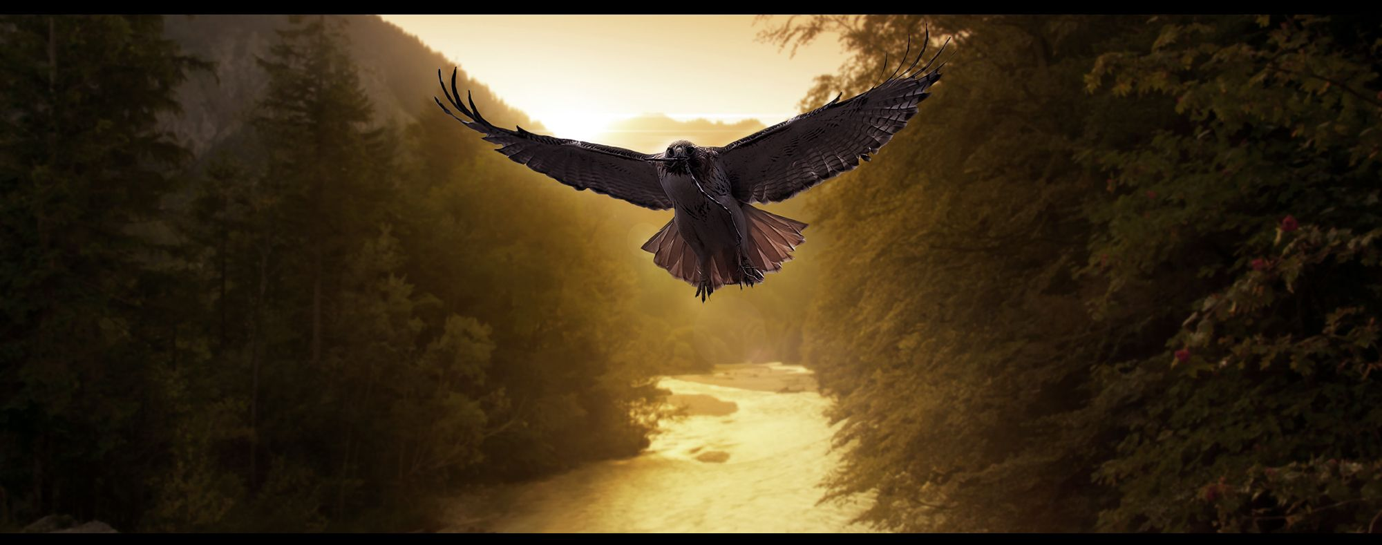 Bird of Prey by machiavellicro.deviantart.com