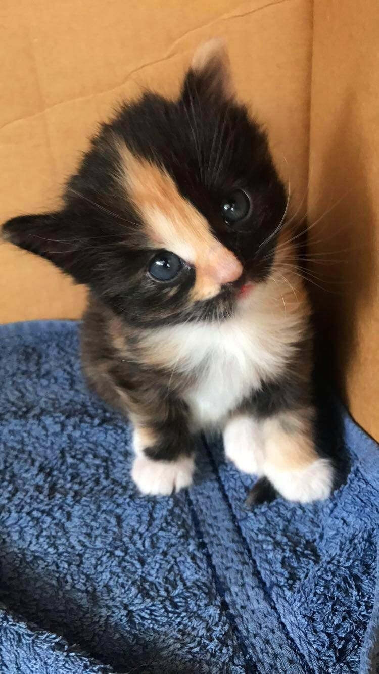 My Old Kitten On The Day She Became 4 Weeks Old Https Ift Tt 2vuh3hw Cute Puppies Cats Animals Cute Animals Beautiful Cats Kittens Cutest