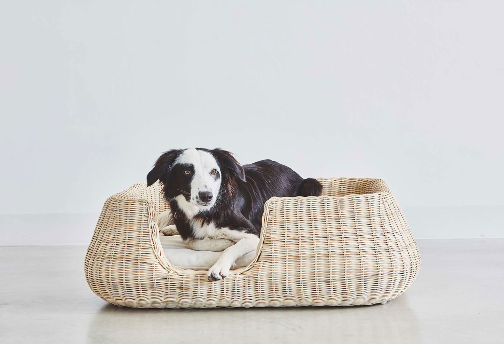 Mio Dog Basket / MiaCara in 2020 (With images) Dog