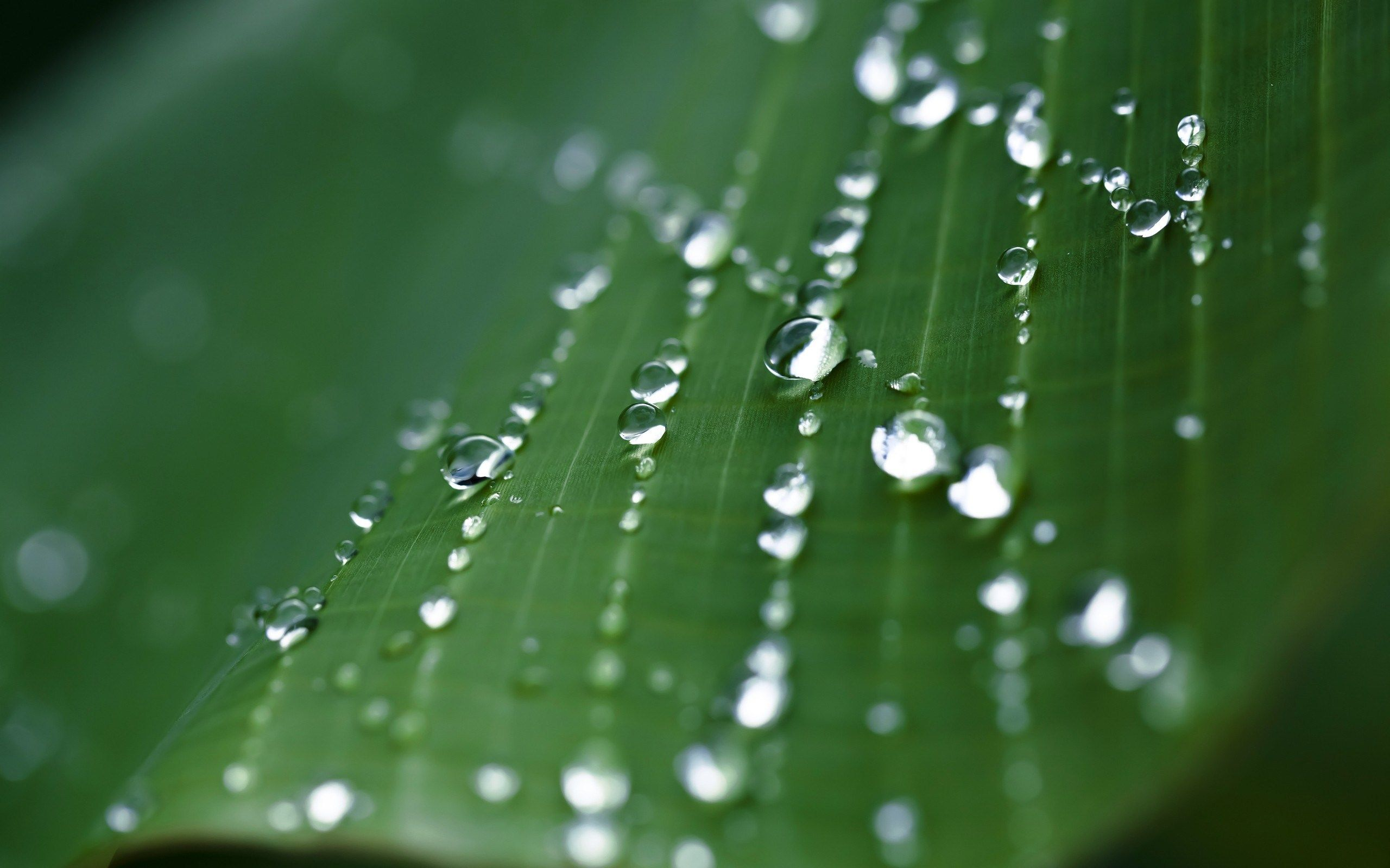Leaf Macro Strings Of Water Droplets Wide Hd Wallpaper