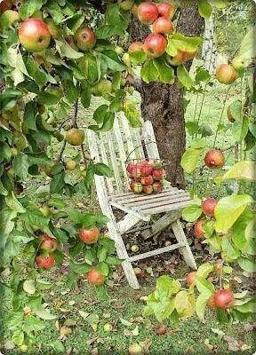 to sit there beneath the shade of the apple tree garden pinterest r colte automne et. Black Bedroom Furniture Sets. Home Design Ideas