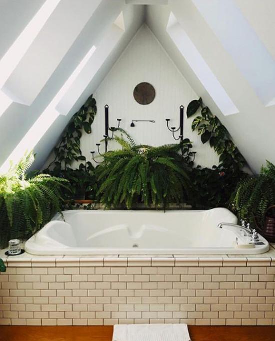 Pflanzen fürs Bad verwandeln es in eine grüne Oase ...