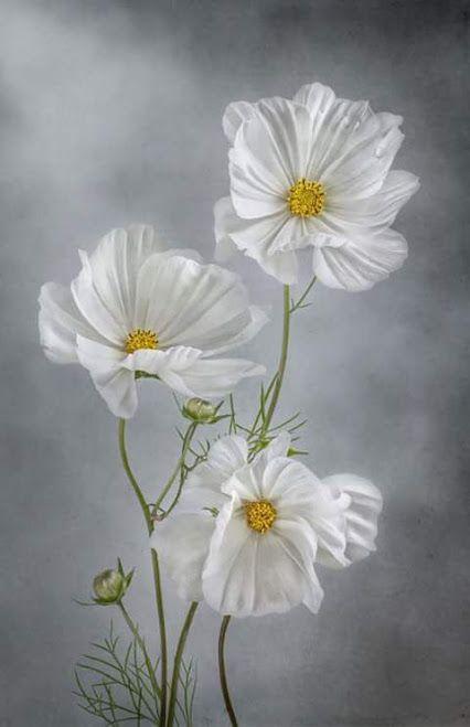 Image result for flores de humildad imagen
