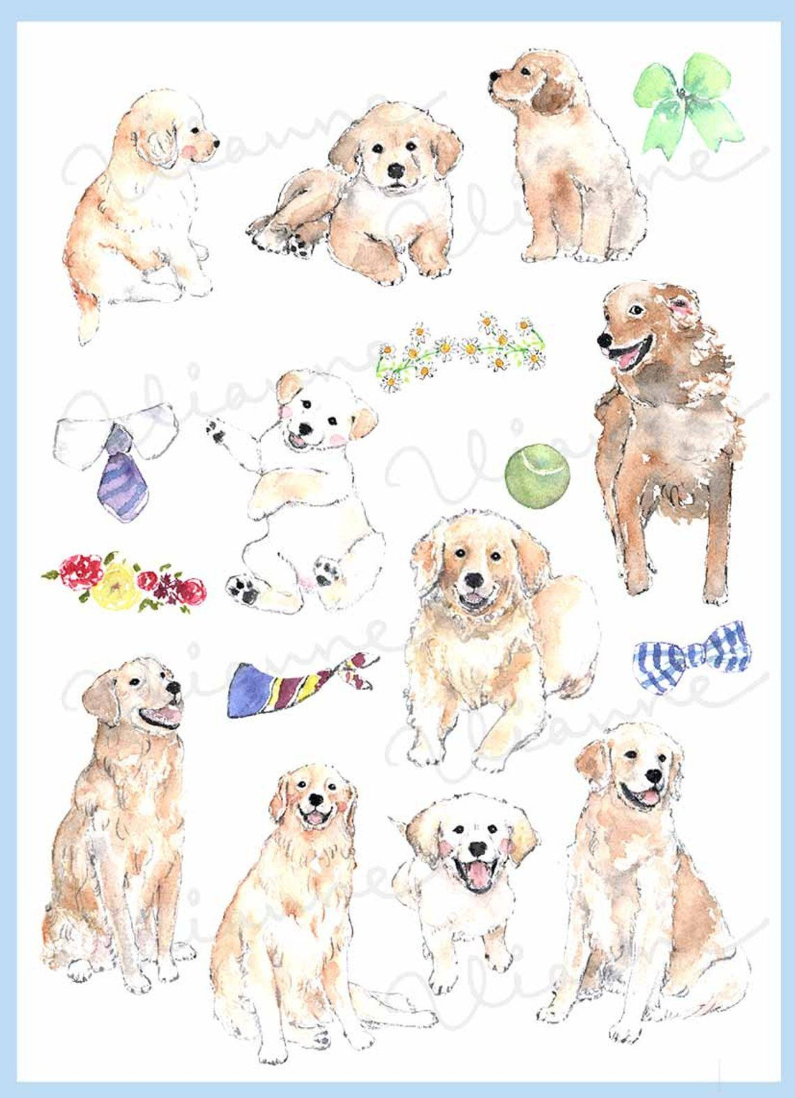 Clip Art Watercolor Golden Retriever Set 17 Images Digital
