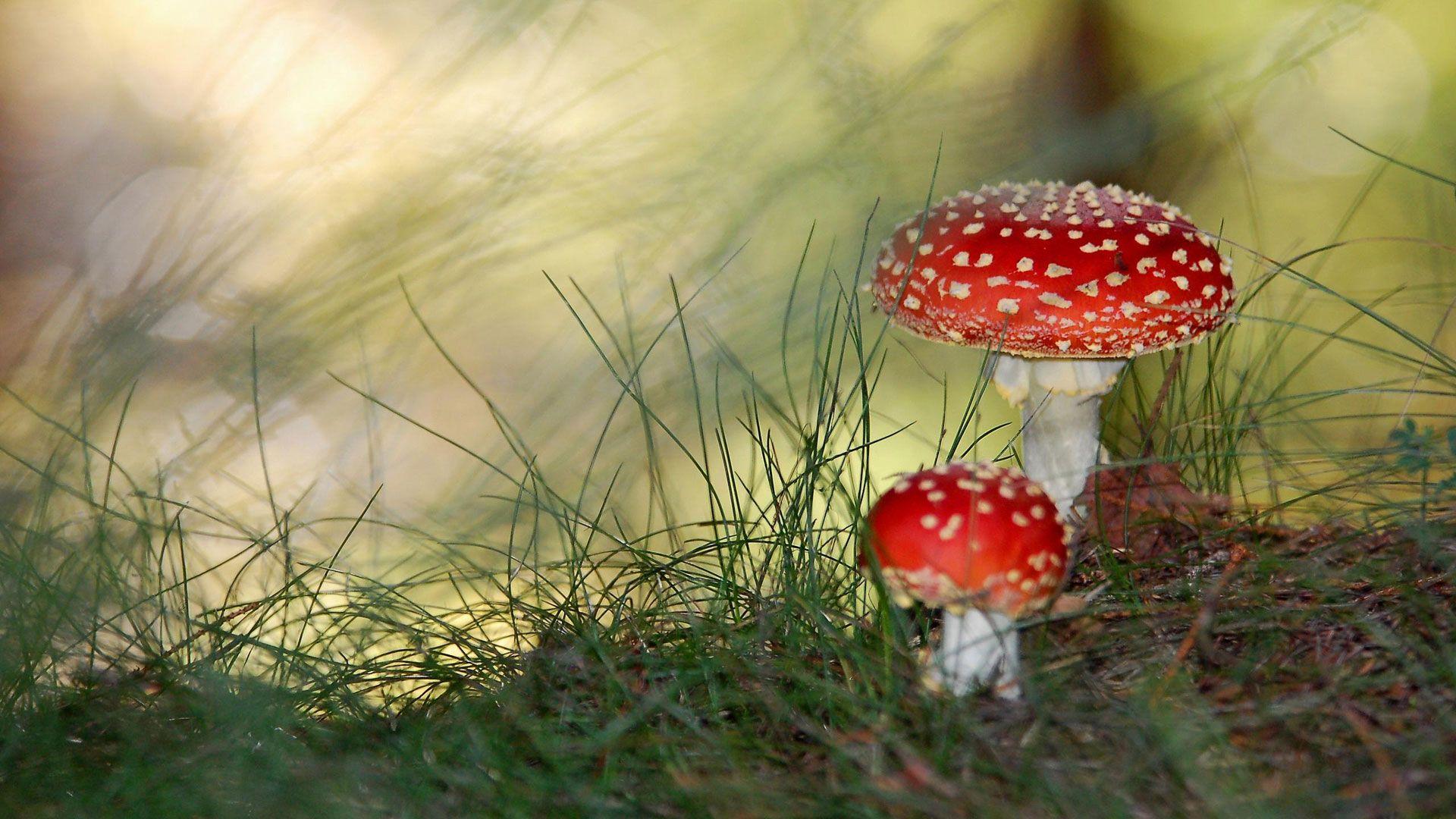 Http Www Hdwallpapers In Walls Small Mushrooms Hd Jpg Stuffed Mushrooms Mushroom Wallpaper Poisonous Plants