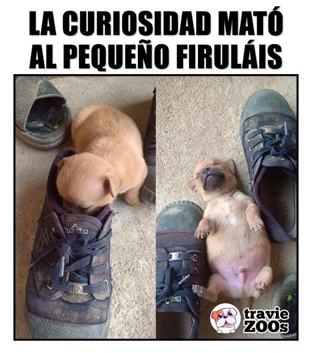 Pin En Perro