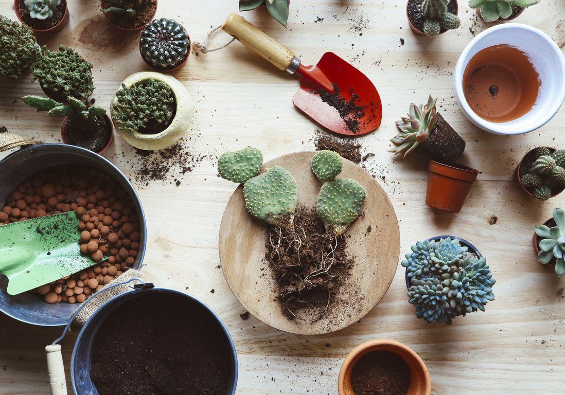 Rempotage : comment rempoter une plante ? - Elle Décoration | Comment planter, Jardinage et Jardins