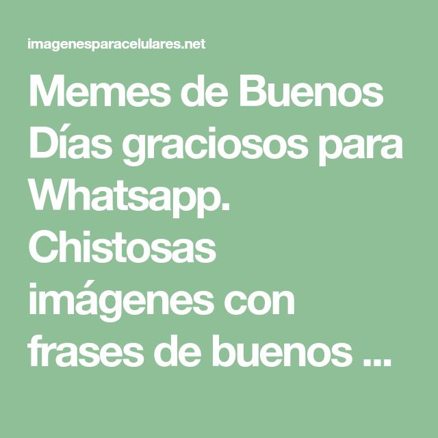 Memes De Buenos Dias Graciosos Para Whatsapp Con Imagenes
