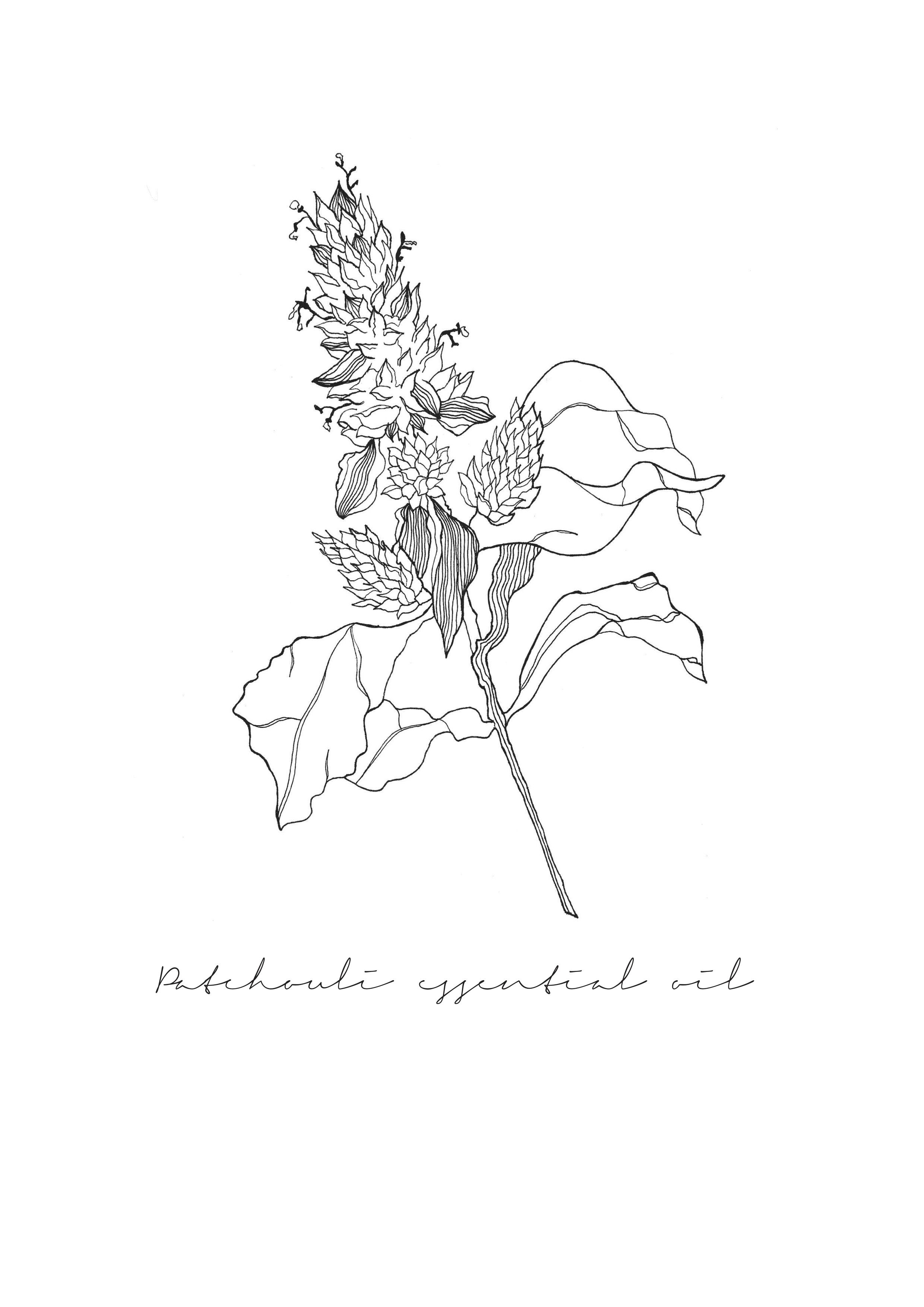 Patchouli Flower : By Pip and Fawn Illustration ...