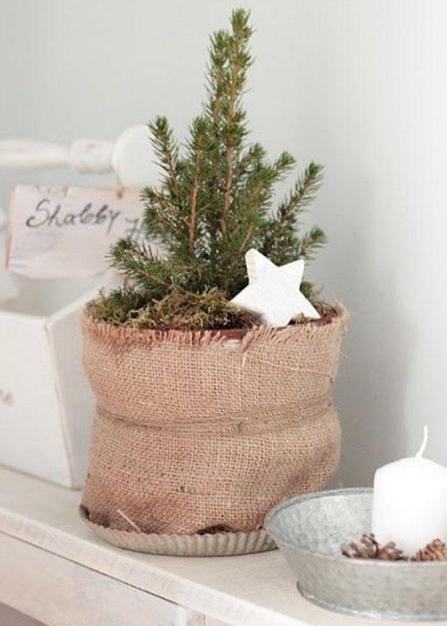 un petit sapin de no l aux airs de petite plante. Black Bedroom Furniture Sets. Home Design Ideas