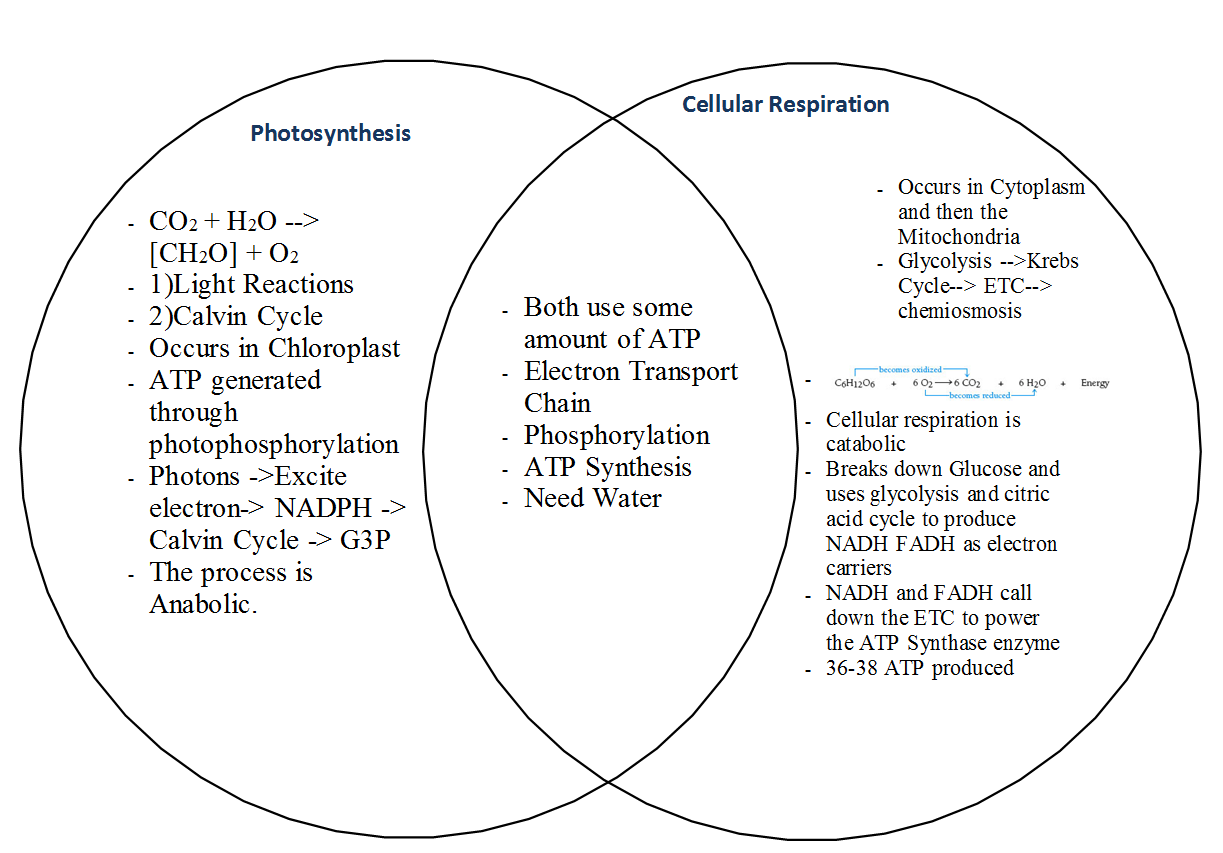 image result for photosynthesis and cellular respiration