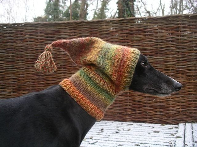Crafting4greyhounds | Fur & feather | Pinterest | Lustiges tier ...