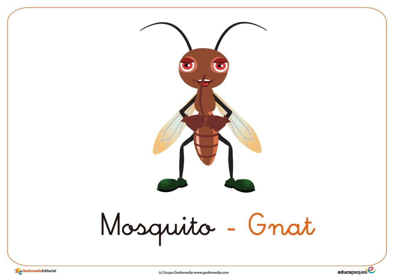 Mosquito Ficha Insectos Fichas Insectos Tarjeta Didactica
