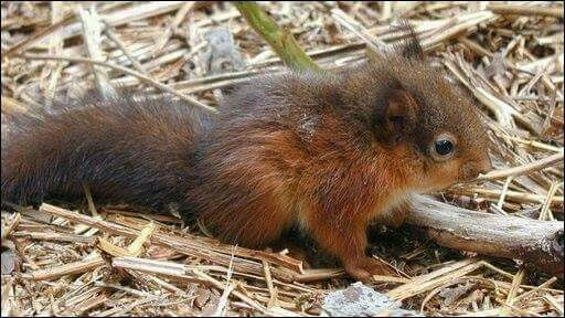 Pin By Sabrina K On Animals I Like Red Squirrel Squirrel Animals
