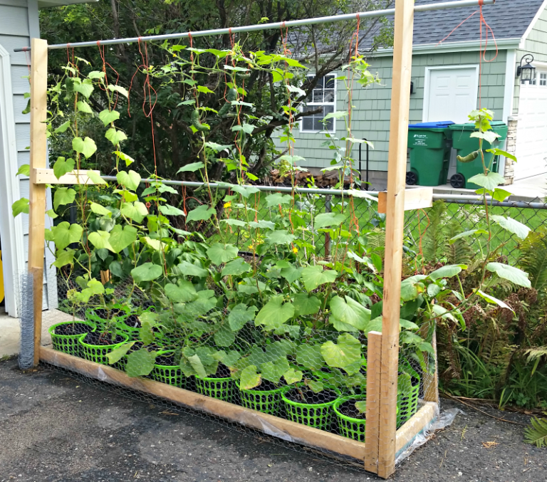 Trellis Wicking Bed Rain Gutter Grow System Hybrid Rain Gutter Grow System Peppers Cucumbers Jalapenos Dill Wi Grow System Garden Projects Rain Gutters
