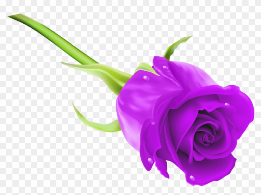 Free Png Download Purple Rose Png Images Background Rose Hd Purple Roses Free Png Downloads Free Png