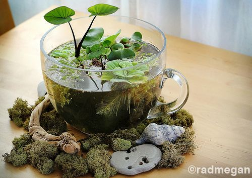 Table-top water garden:  - A glass container, bowl, wide-mouth vase etc.  - Water plants such as taro, water lettuce, water hyacinth, duck weed, fairy moss etc.  - Plastic pots shorter than the height of your glass vessel  - Assorted rocks  - Potting soil  - Charcoal bits  - Mosquito fish (optional)  - Pure water