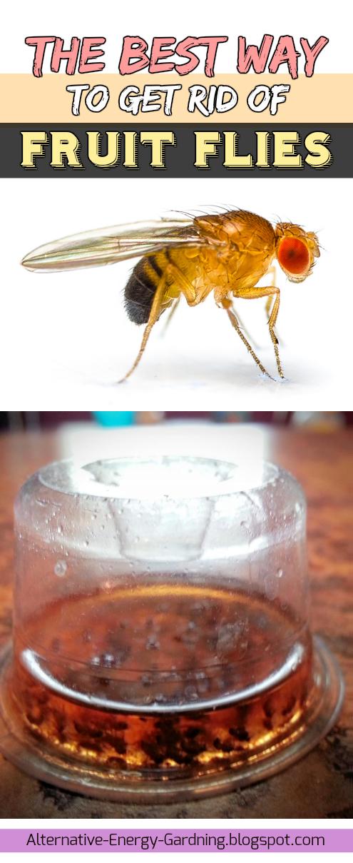The Best Way to Get Rid of Fruit Flies (Alternative