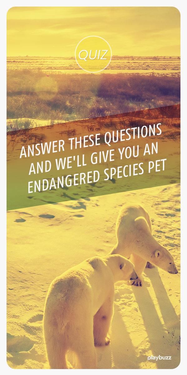 Answer These Questions And We'll Give You An Endangered Species Pet