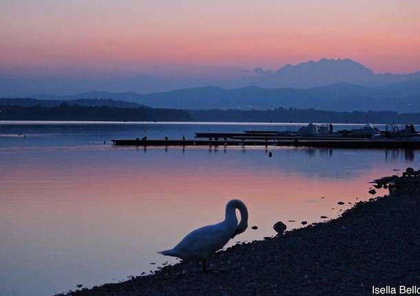 Il cigno e il lago