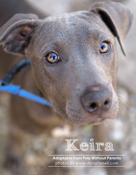 Pin On Pit S Up For Adoption