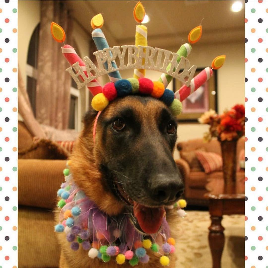 Happy Birthday German Shepherd Youtube