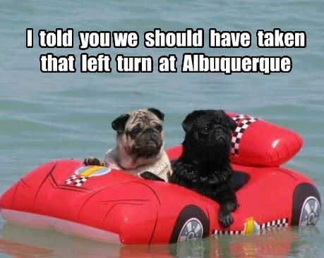 14 Nonsensical Photos To Get You Over Hump Day Cute Pugs Cute