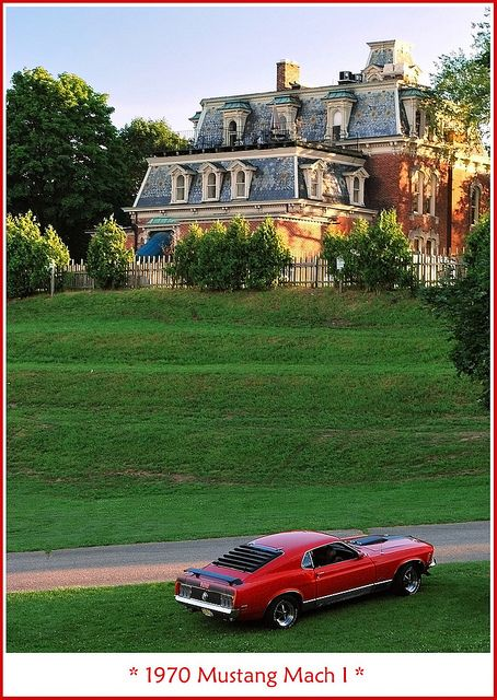 A mustang for your mansion