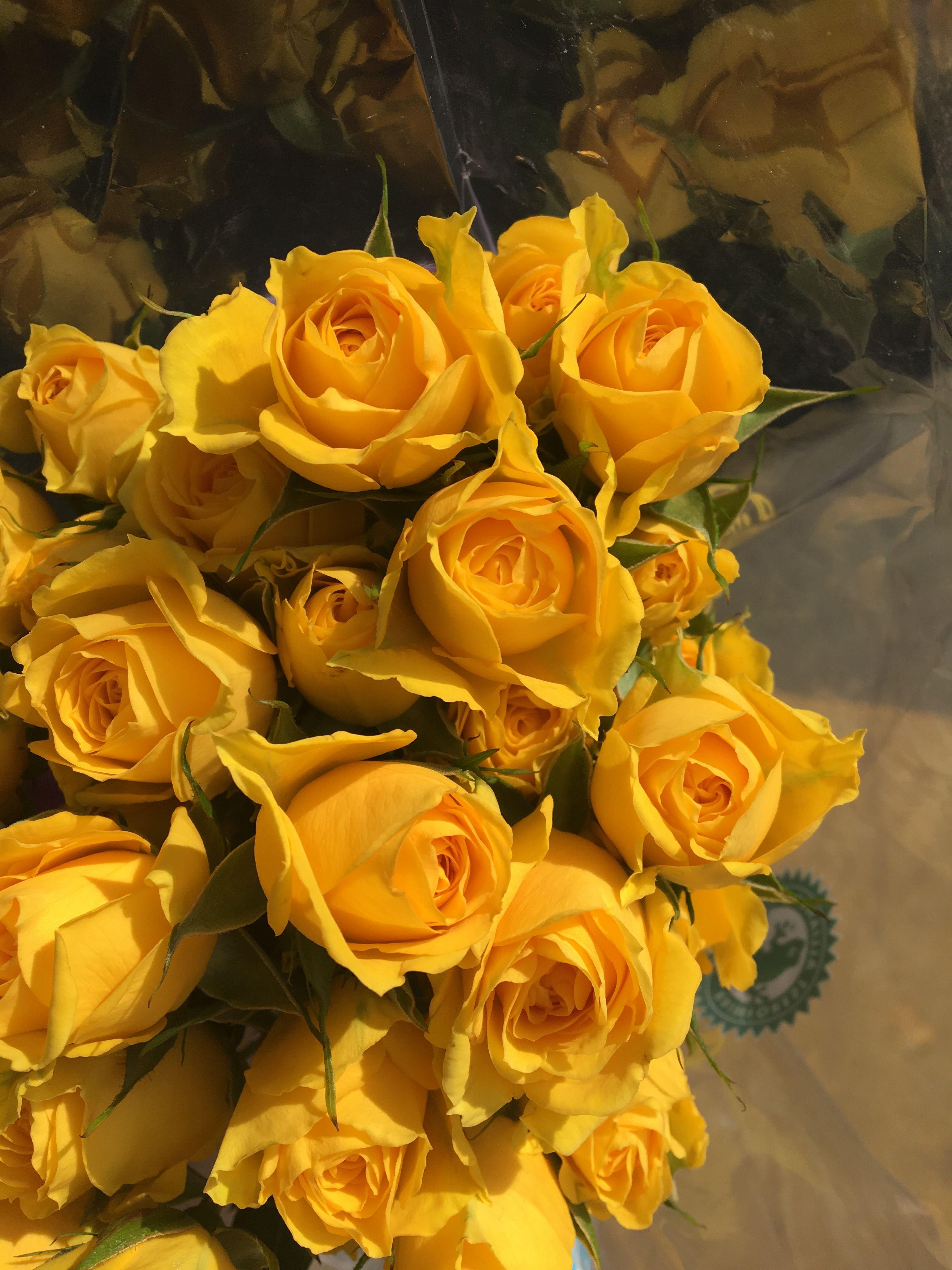 Pin by Caitlin Lloyd on flora Yellow flowers, Orange