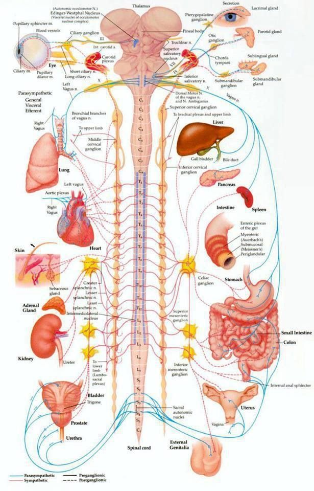 Your spine protects the wiring to all of the organs of your body ...