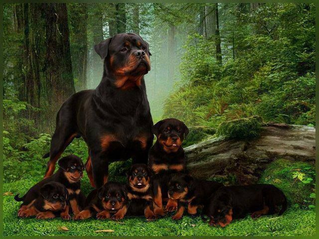 Proud mom and her pups