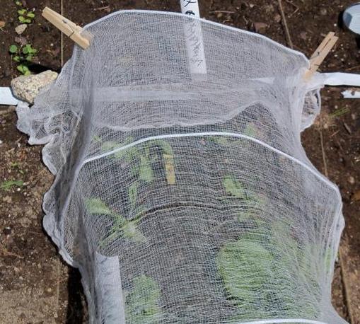 Algunas ideas para hacer frente a la meteorolog a adversa for Preparar el huerto en invierno