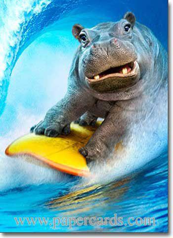 Hippo Surfing Funny Birthday Card Greeting Card By Avanti Press