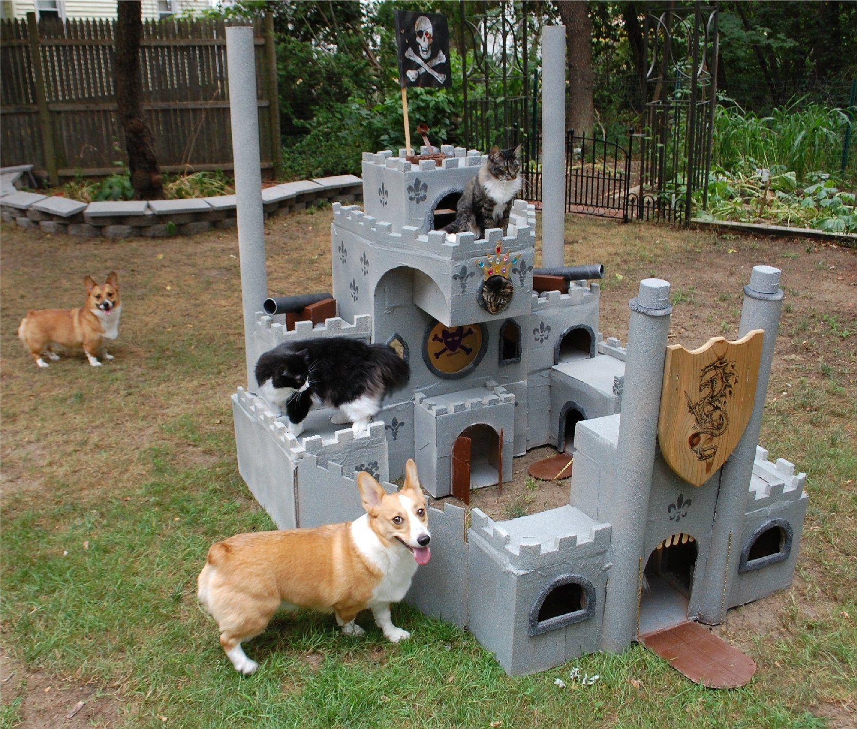 Corgi Cat Castle Aka Corgi Summer Fort Animals Funny Animals Funny Animal Pictures