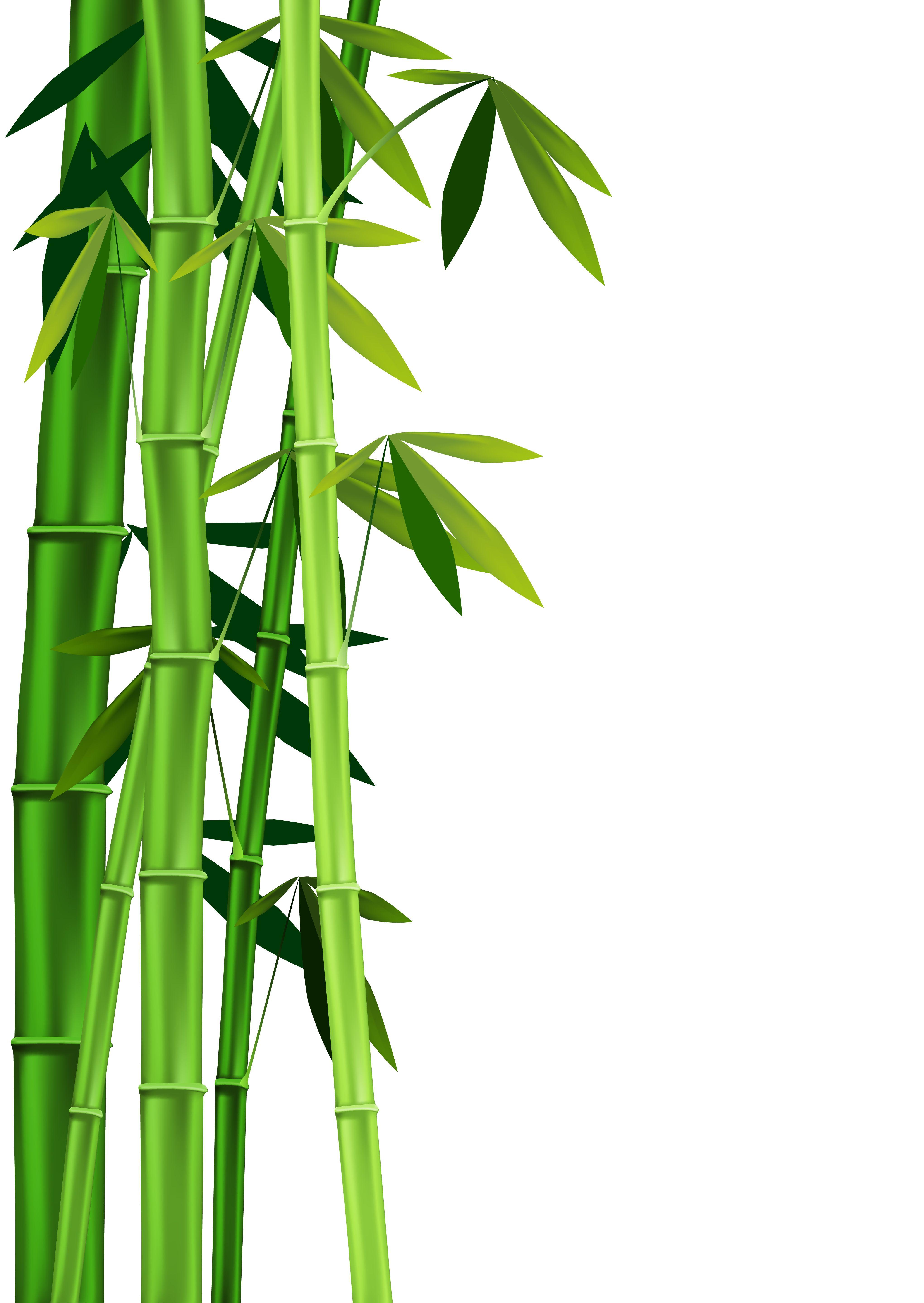 Bamboo Art Design : Images of bamboo google search panda ideas pinterest