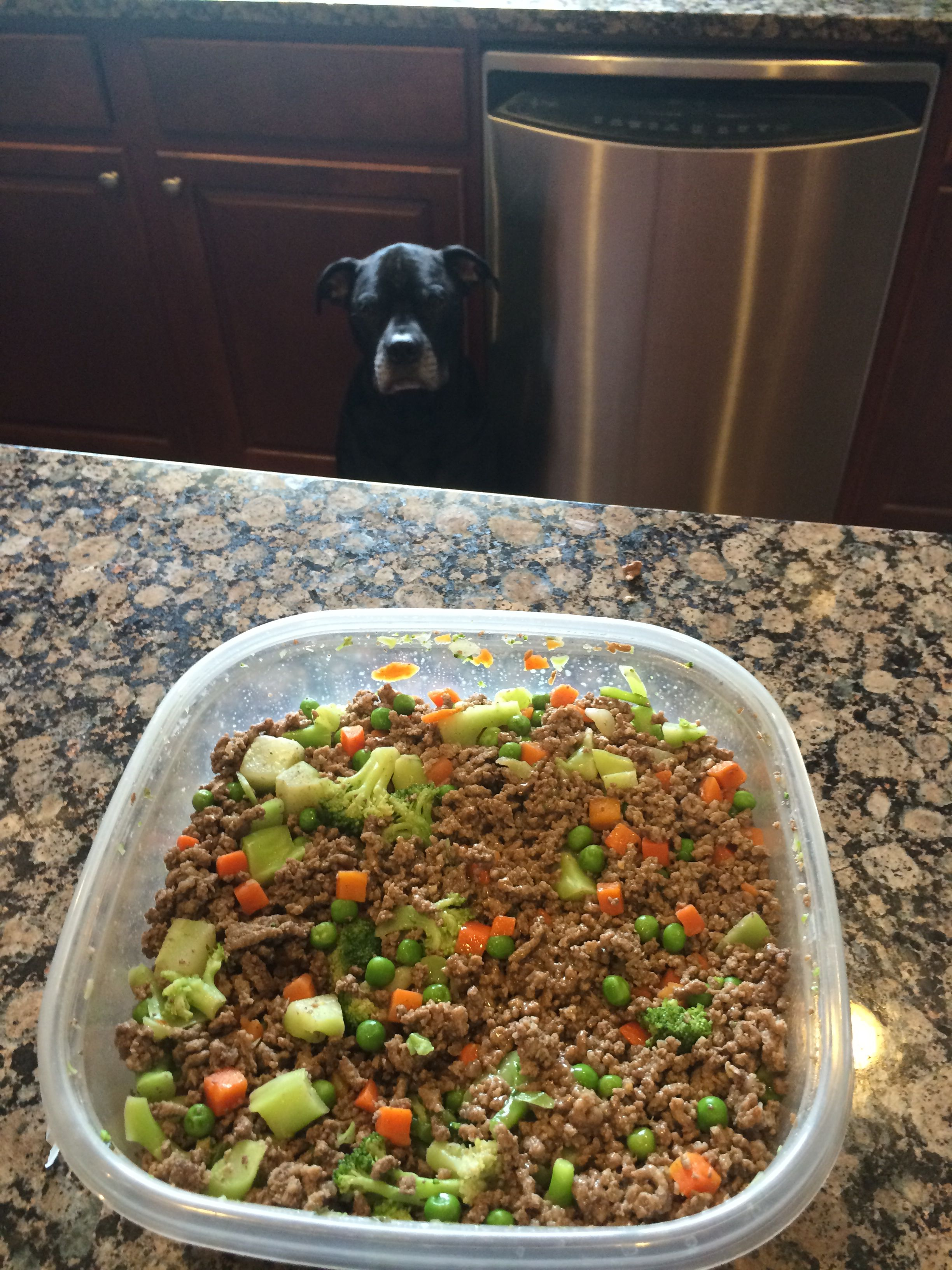 Easy Homemade Dog Food Meal Dog Food Recipes Homemade Dog Food