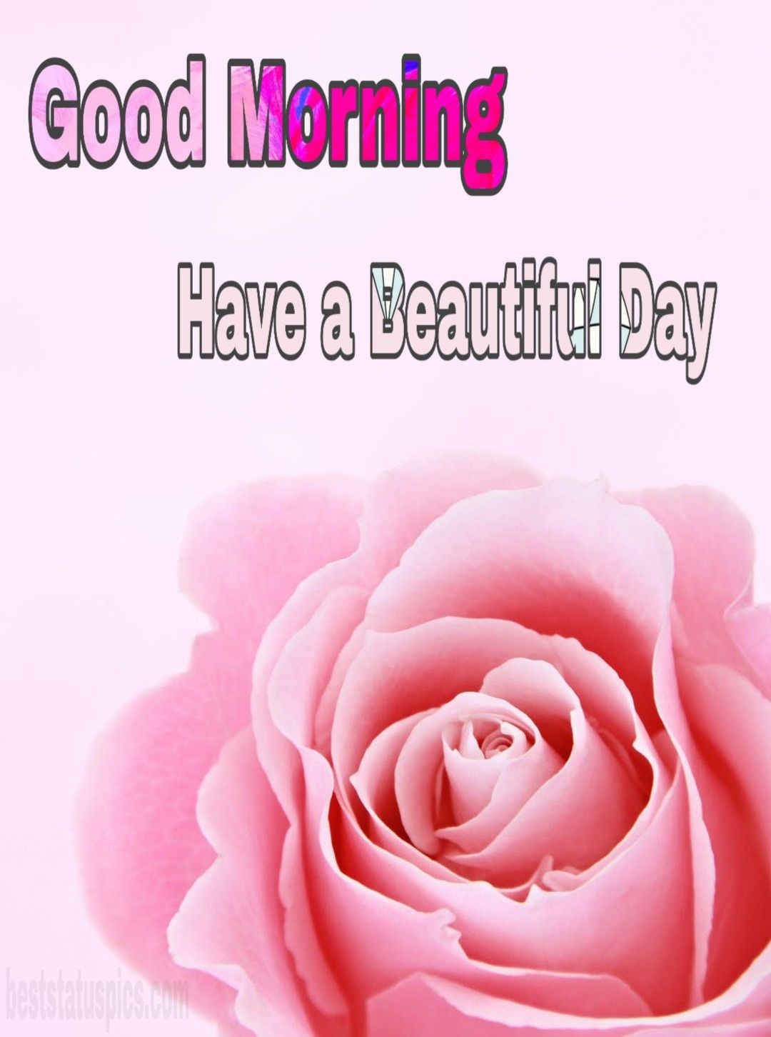You can download Good Morning Romantic Rose Flower Images