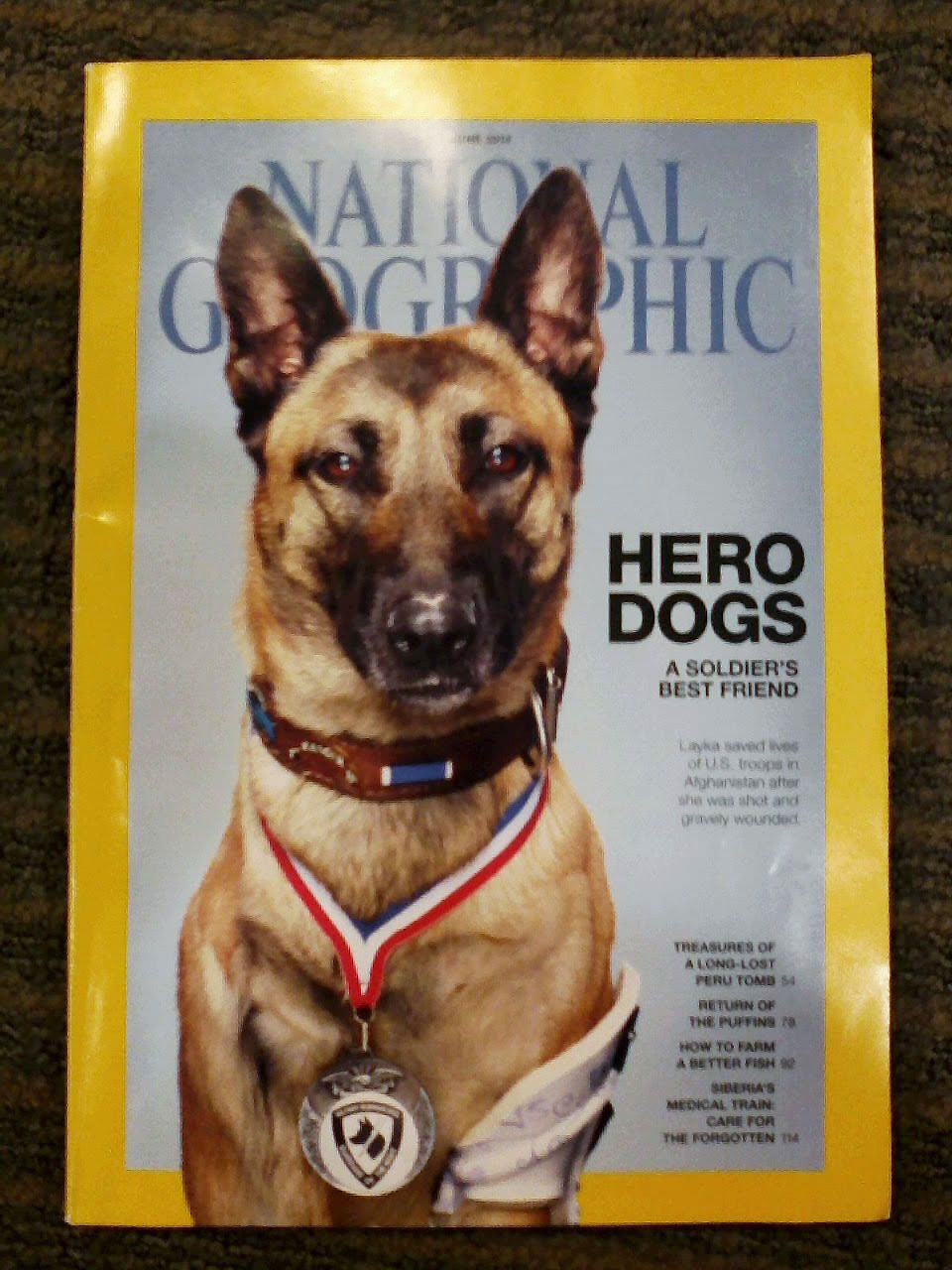 Top 10 most inspiring Hero Dogs