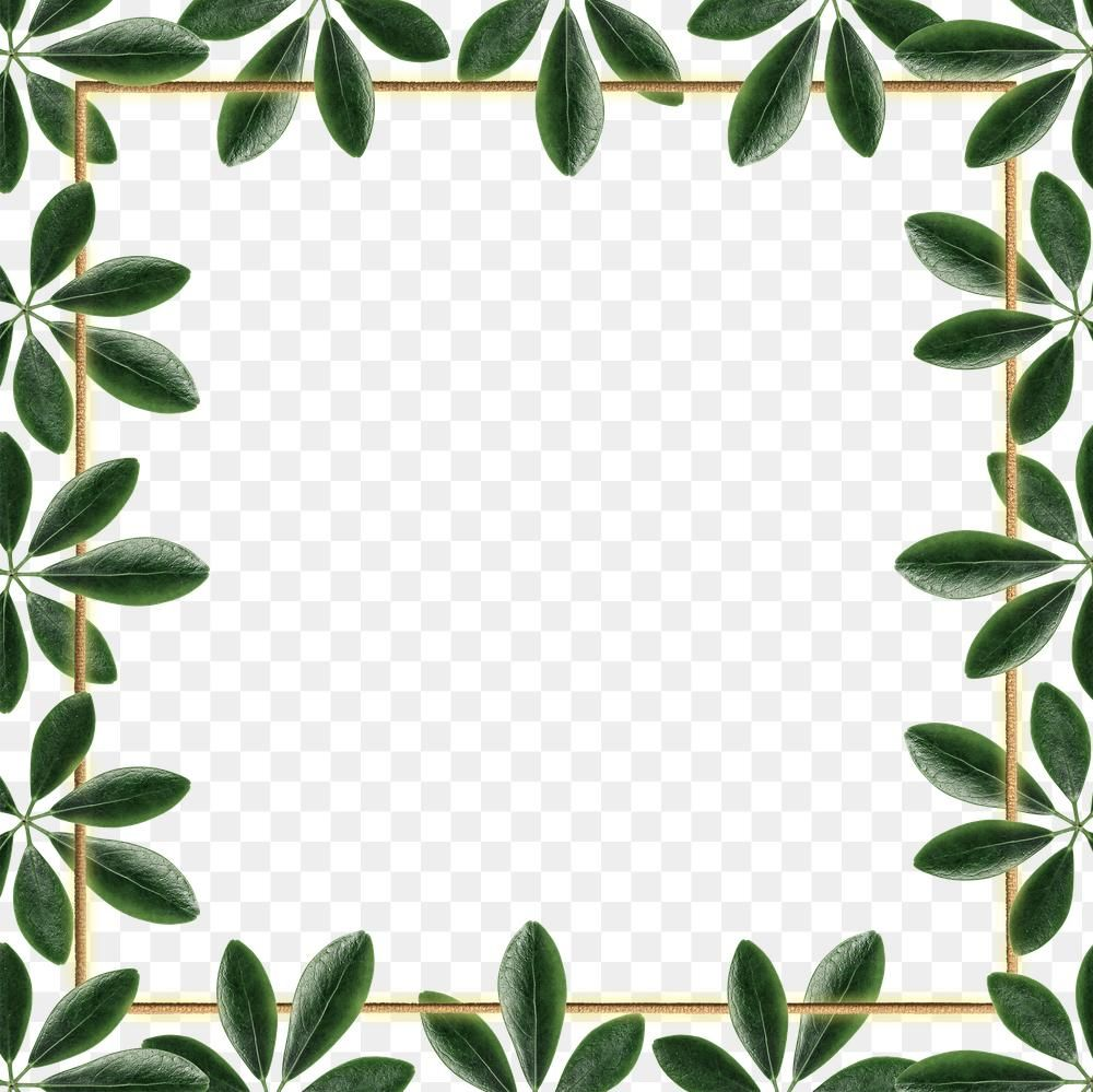Green Leaves With Square Frame Design Element Free Image By Rawpixel Com Jingpixar Frame Design Square Frames Design Element