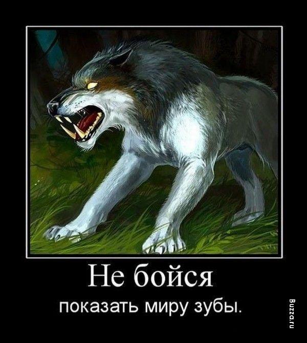 Ты один волк демотиватор