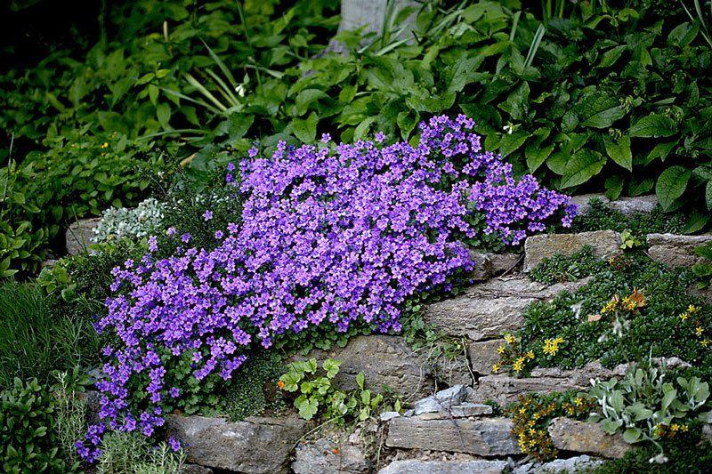 стильные ползучие растения для сада фото жидкость накапливается