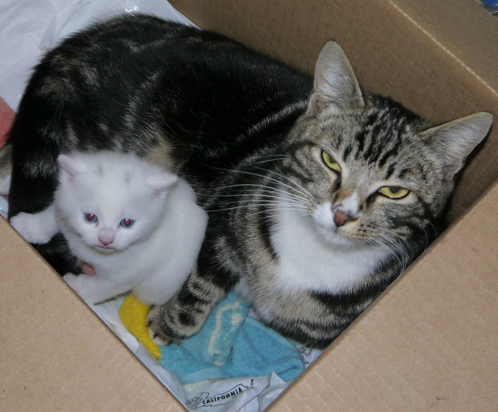A Stray Tabby Cat Gave Birth To Only One Kitten 1 1 Baby Cats Mama Cat Cats