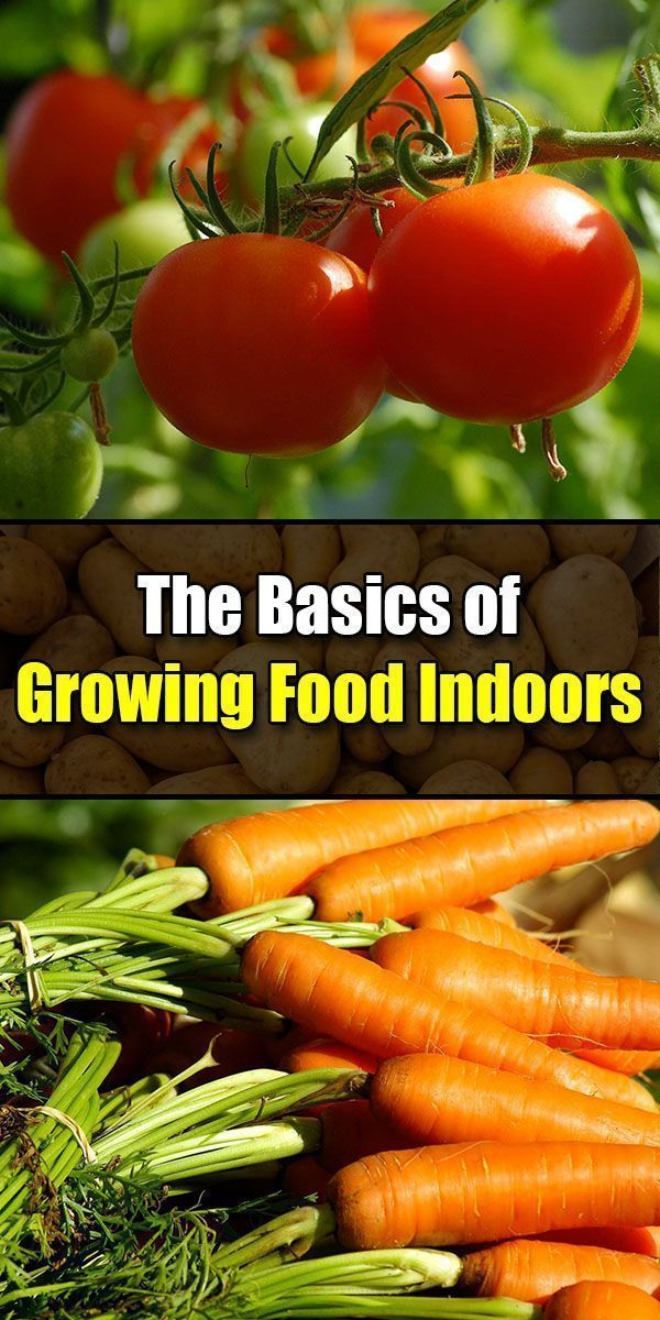 The Basics Of Growing Food Indoors In 2020 With Images 400 x 300